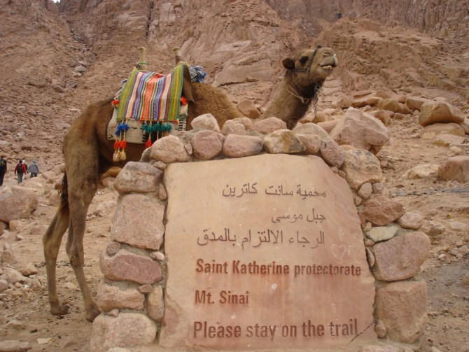 A Welcome from Mr Camel