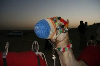 Desert Safari_28