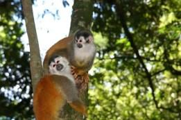 Monkeys_12