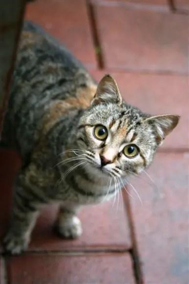 Parma Kitty