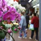 Flower Market Hong Kong
