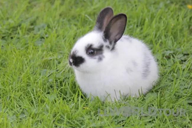 Bunny rabbits at White Point Resort
