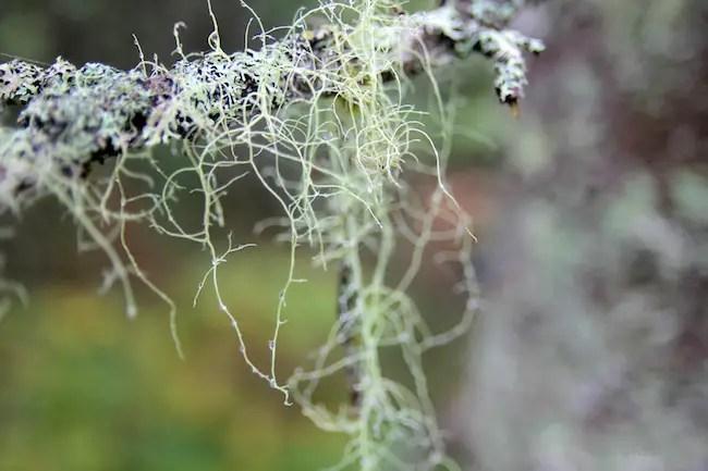 Keji Park Lichen