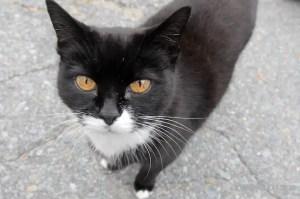 Meow Hunkabunka - Shelburne, Nova Scotia