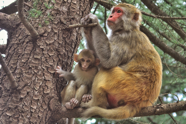 Okay, maybe it was just this one baby monkey that had a creepy, shriveled face...