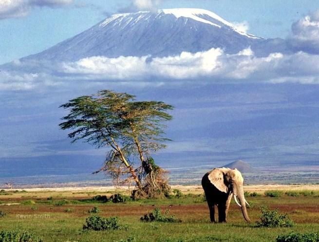 Tanzania_Safari