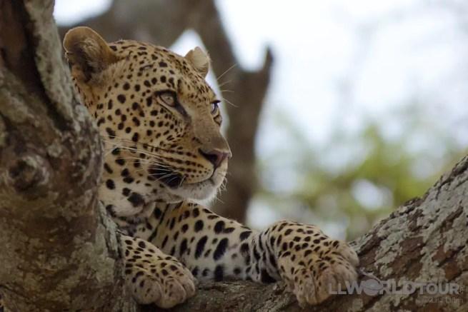 Serengeti Park126
