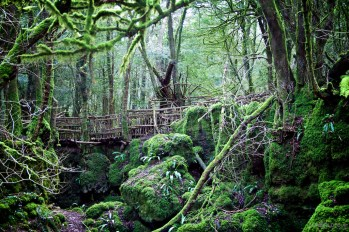 Puzzle Wood in the Forest of Dean