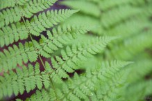 Fern at PEI National Park