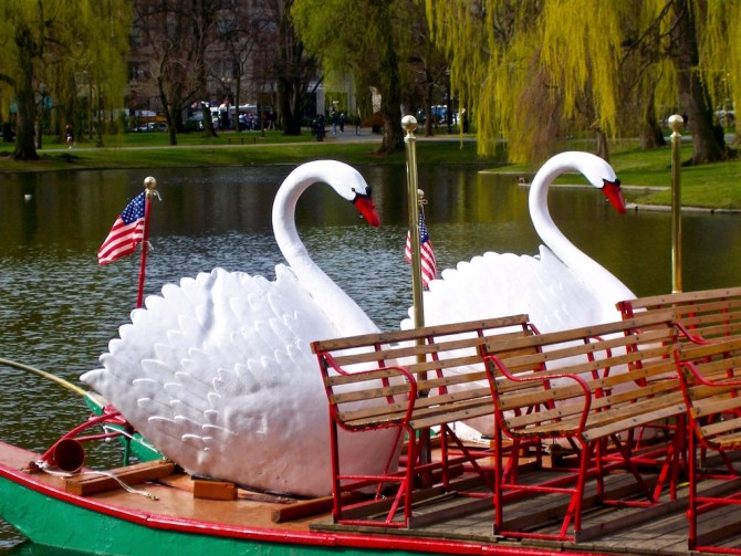 Boston-Garden-swans