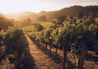 Destination Spotlight: Napa Valley