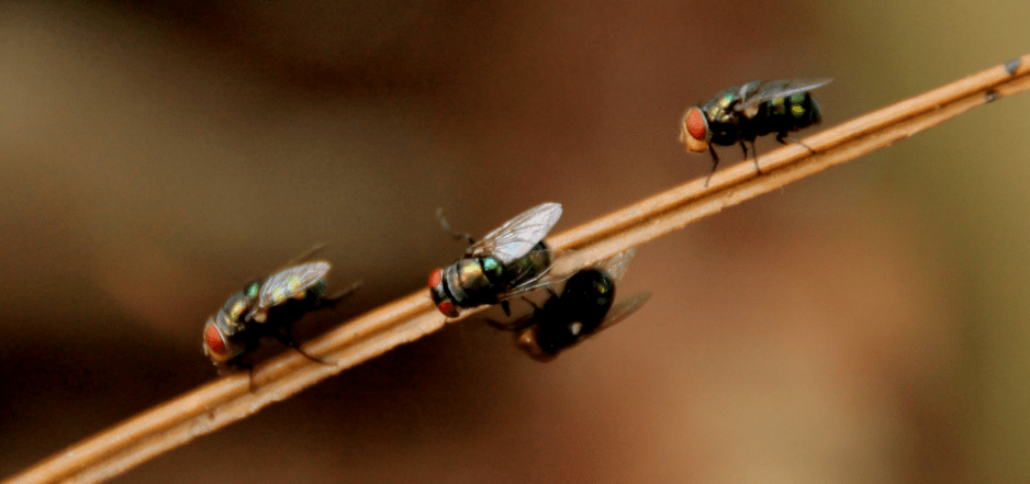 flies perching on a stick