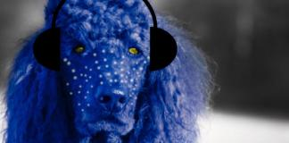Latest Features Of PoodLL, Moodle's Beloved Pet For Audio Recording