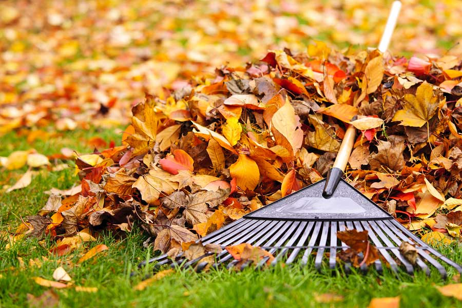 Garden Waste Clearance and Recycling