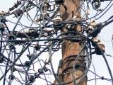 Zašto su građani leve obale Beograda ostali bez struje usled nevremena 30.05.2013