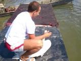 Sugrađanin spasao labuda na Pančevačkom mostu – 03.09.2013