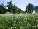 Park u Glogonjskom Ritu leglo krpelja i zmija - 21.05.2013
