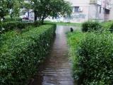 Borča - Centar II pod vodom - Poplava - 15-05-2014