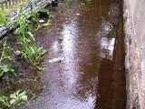 Poplava - Krnjača - 15-05-2014