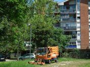 Pokošene travnate površine u Borči a danas popravka i farbanje klupa
