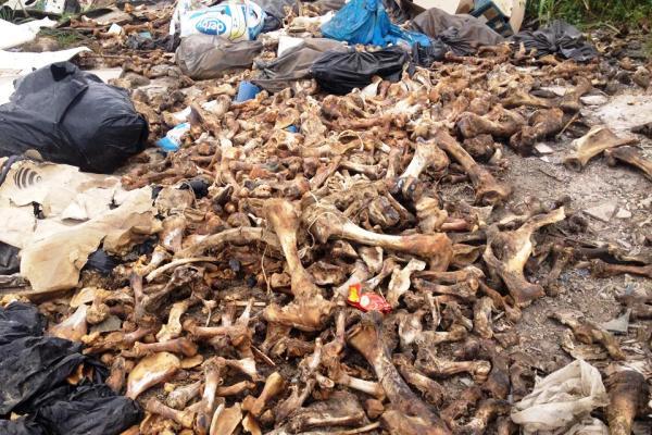 Kosti na divljoj deponiji na nasipu  - 2015