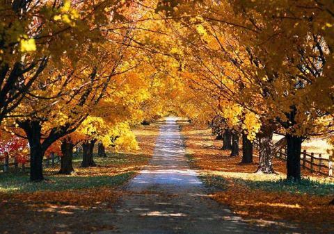 Jesen stiže dunjo moja