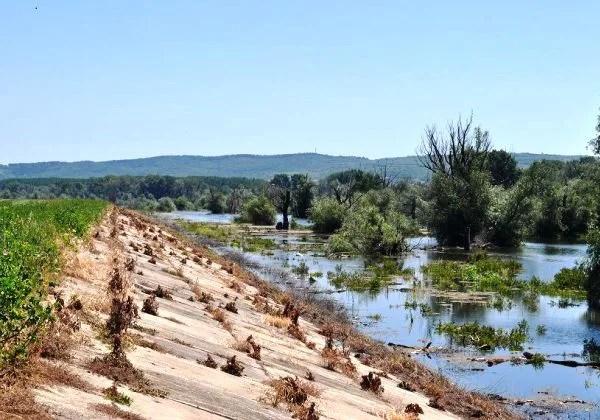 Na nasipima na Dunavu dežura 200 volontera
