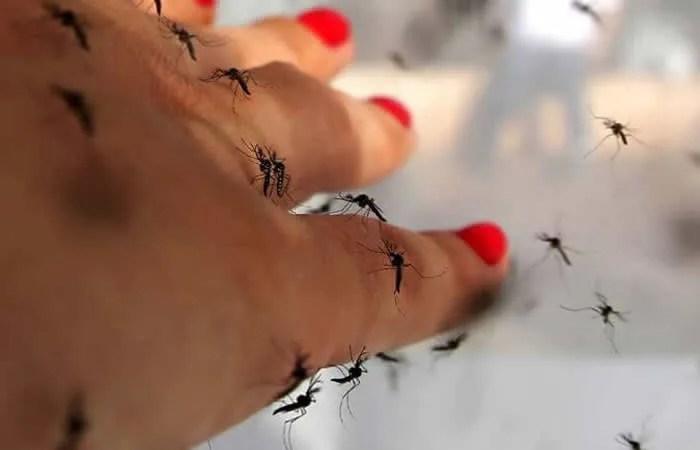 Komarci, LOBI