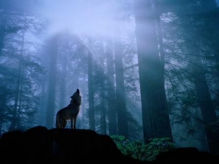 Resultado de imagen de imagenes de lobo aullido