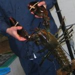 Holding Four Pound Lobster