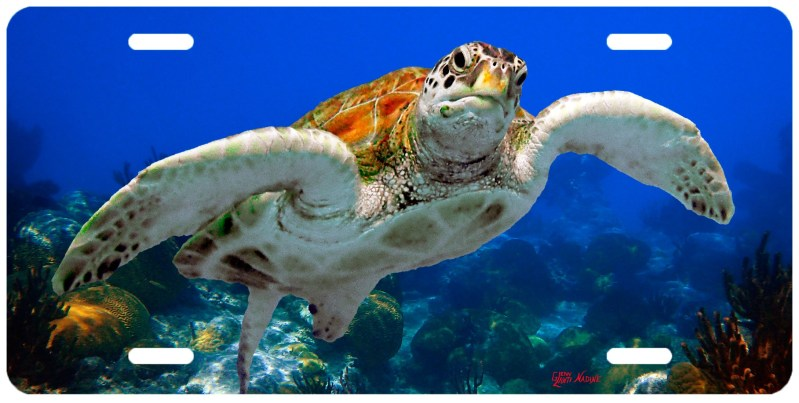 """""""TURTLE WITH CORALS"""""""
