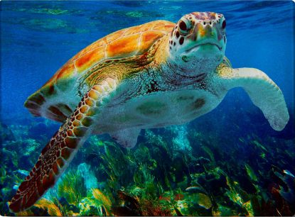 underwater photo of a turtle on a glass cutting board
