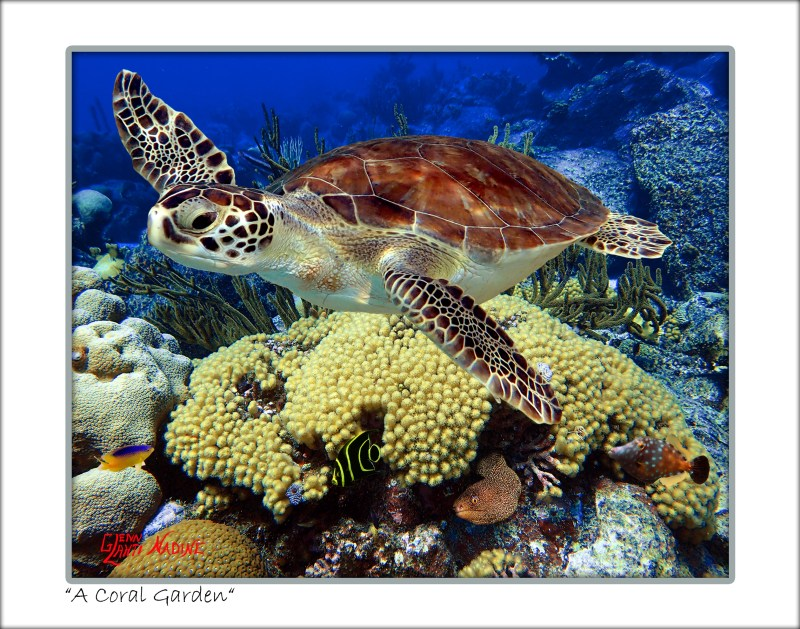 Underwater Photo Art Prints