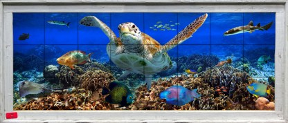 Coral reef with turtle and tropical fish in wood frame