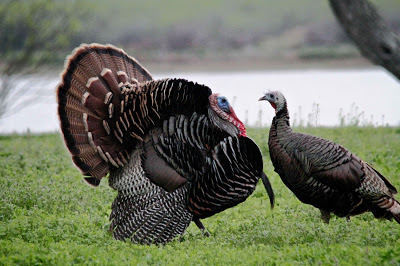 Talkin' Turkey: Pro Tips to Crush Your Yelps [Video]