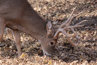 Montana Fights CWD with New Rules (Hunting News)