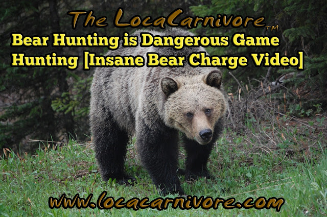Bear Hunting is Dangerous Game Hunting [Insane Bear Charge Video]