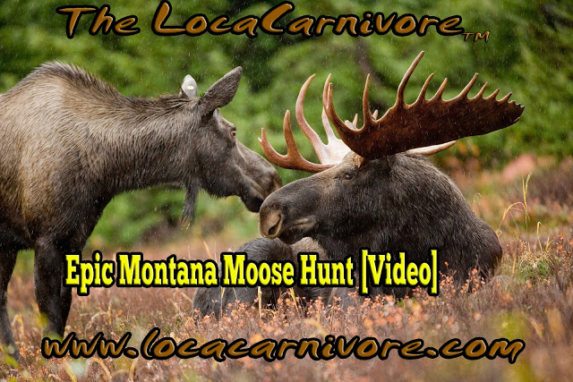 Epic Montana Moose Hunt [Video]