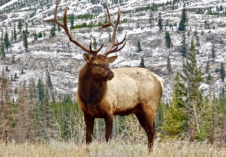 Montana's Best Kept Secret Places for Elk and Deer