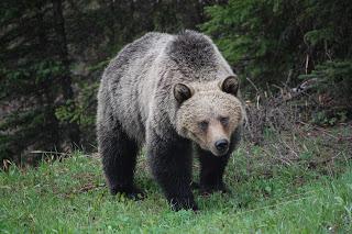 Montana Woman Travels 4 Miles After Near-Fatal Bear Mauling