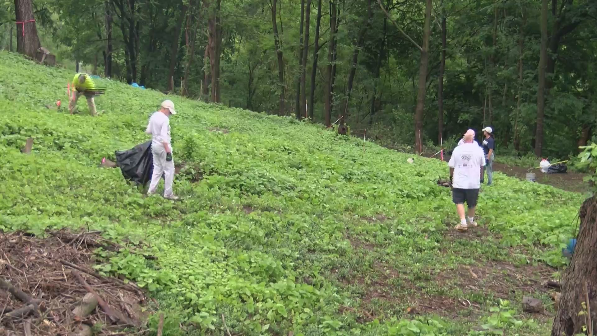 Cemetery_cleanup_0_20180602231445