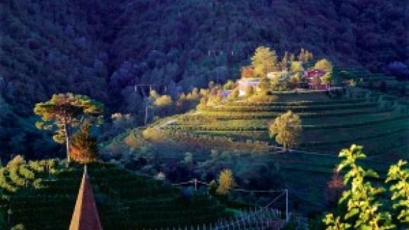 cantina vigne matte