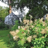 Masses of tall perennials are set off by the lush green lawn. Above are fleece flowers.