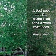 The birch trees loom ahead like a brotherhood of ghosts. ~Lisa Ann Sandell