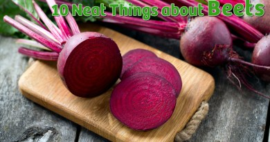 cool facts about beets