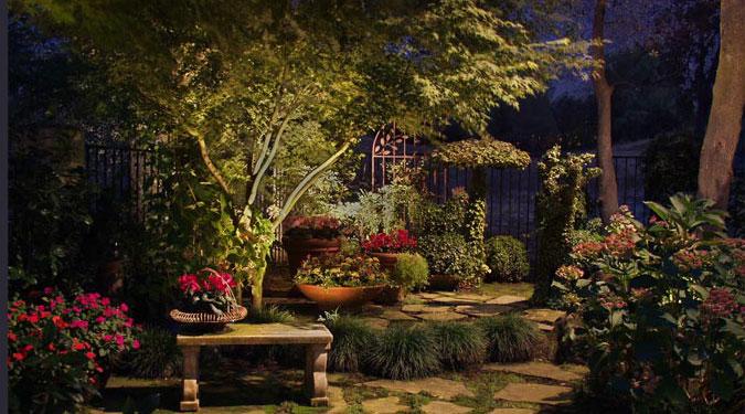 garden after dark
