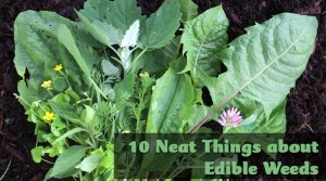 10 neat things about edible weeds the gardener show