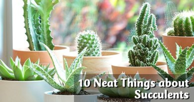 10 Neat Things about Succulents