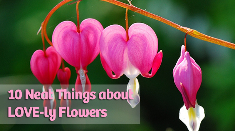 10 neat things about love flowers