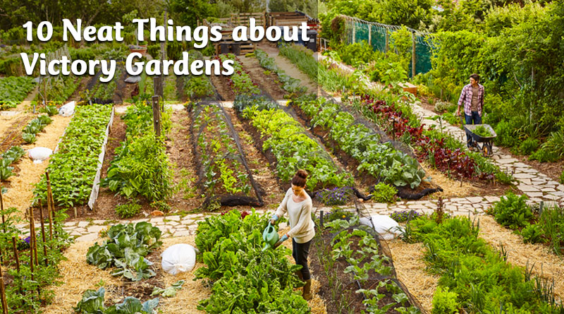 10 Neat Things about victory gardens